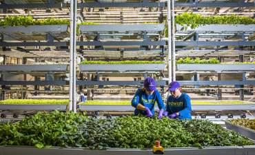 Bowery Farming facility